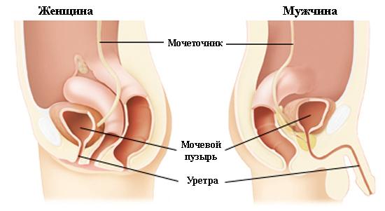 Как выглядит уртерит