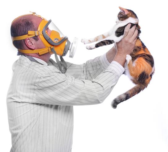 Кот и аллергик