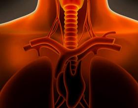 Аллергический трахеобронхит: причины, симптомы, диагностика и лечение