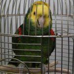 Аллергия на попугаев: может ли он быть, симптомы и лечение