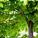 Аллергия на деревья: причины, симптомы и что делать