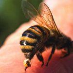 Аллергия на укус пчелы: причины, симптомы и что делать