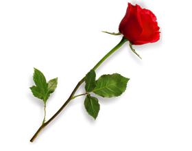 Аллергическая реакци на розы