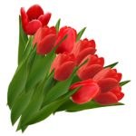 Аллергия на тюльпаны: причины, симптомы и что делать