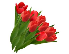 Аллергия на тюльпаны