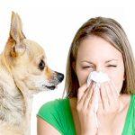 Аллергия на собак у детей и взрослых: симптомы и лечение