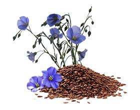 Аллергия на лен и его семена