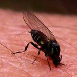 Аллергическая реакция на укус мошки: причины, симптомы и что делать